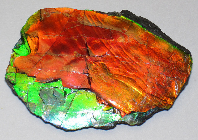 Ammolite - St. Mary River Valley