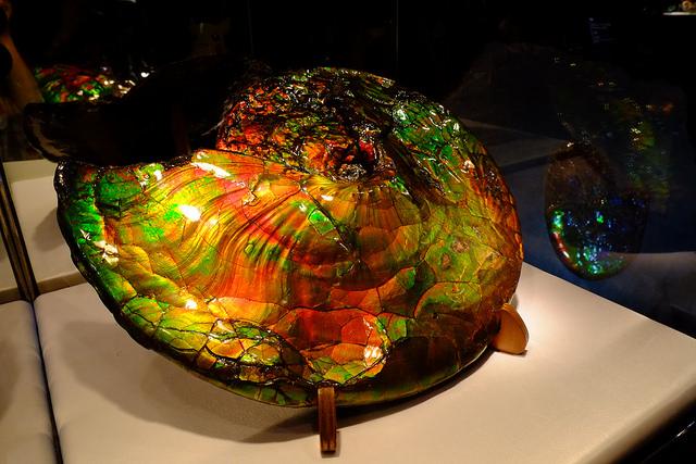 ammolite - Dinosaur Expo