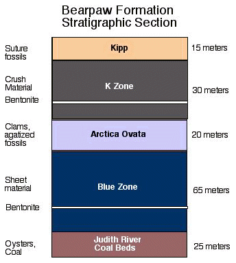 Bearpaw Formation stratigraphic section