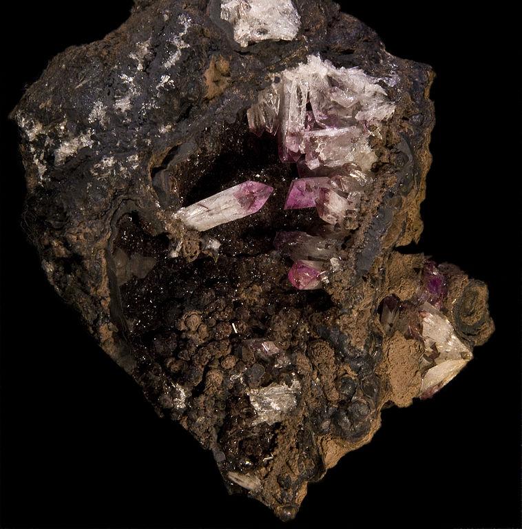 Manganoan adamite - Mexico