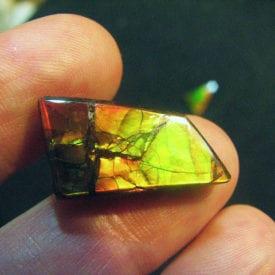 cut ammolite - Korite