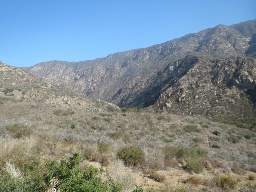 California turquoise - Mojave Desert