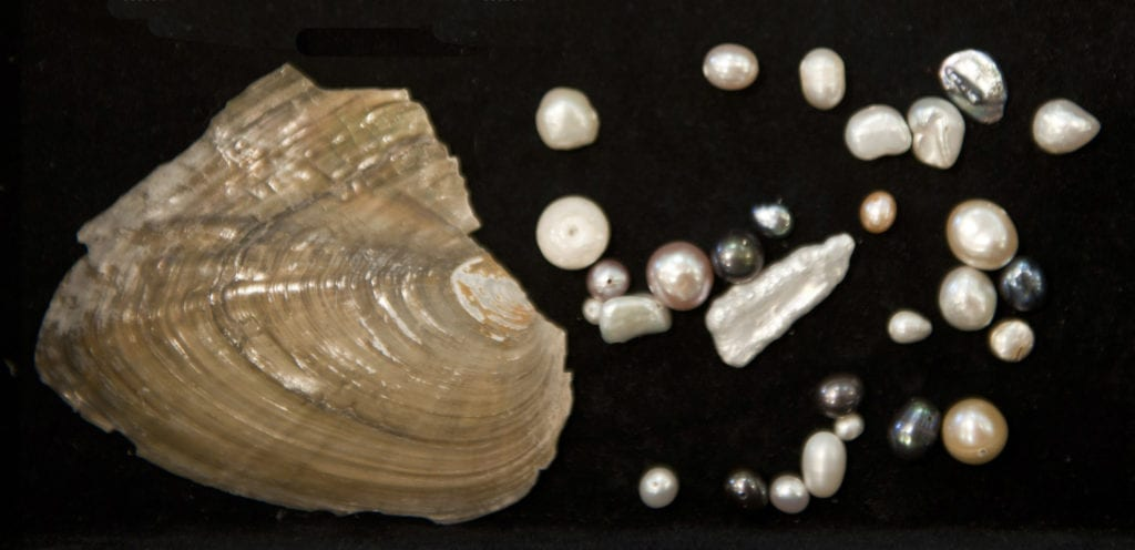 freshwater mussel with pearls - pearl symbolism