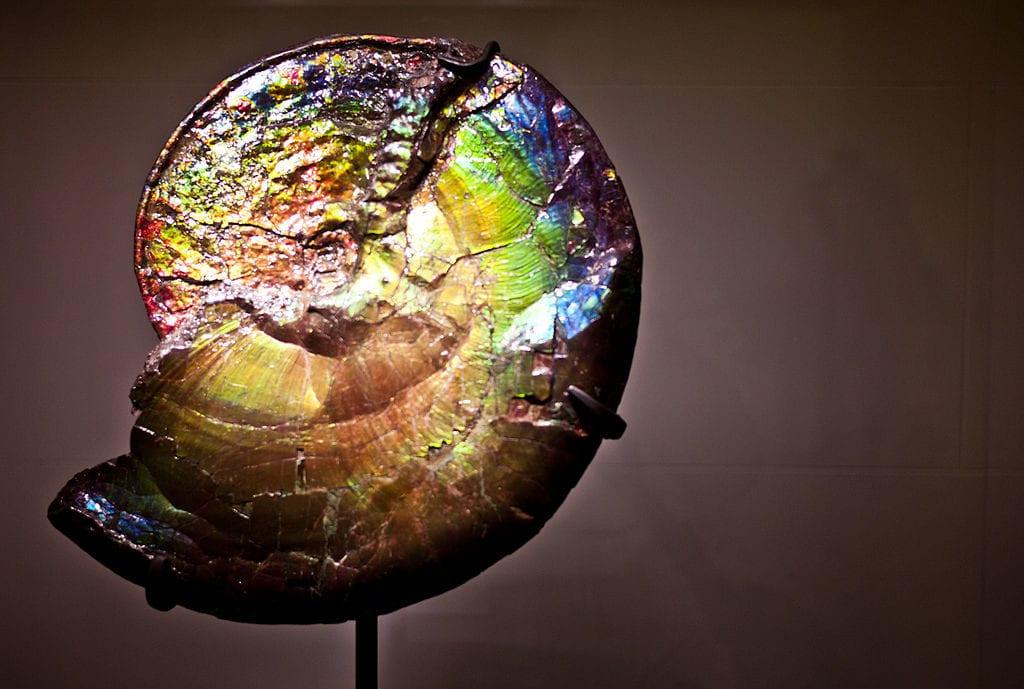 ammolite buying guide - ammonite specimen
