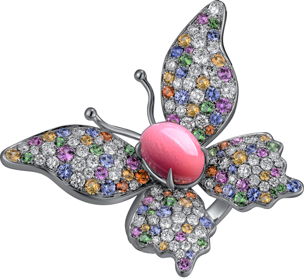conch pearl buying guide - conch pearl butterfly