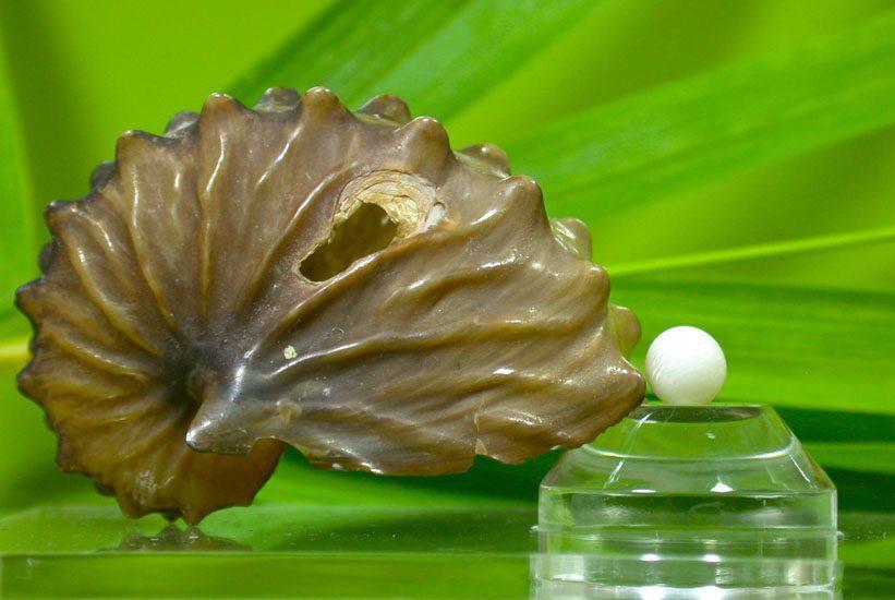 natural pearl - pearl expert
