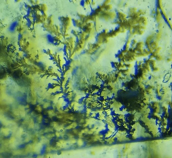 PIC 02 Dendrite translucent brown Bellerophon Gemlab